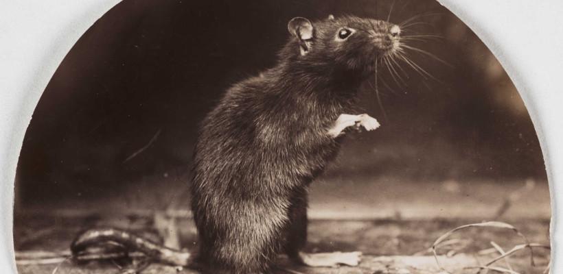 Różne pułapki na myszy i szczury.